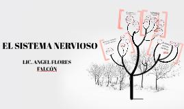 Copy of El sistema nervioso