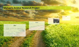 Michael's Animal Research Project