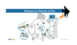 Fish 101: Diseases & Ailments