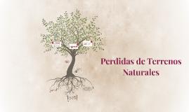 Perdidas de Terrenos Naturales