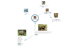 Red Kangaroo Food Web