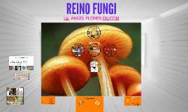Copy of REINO FUNGI