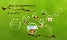 Citrus in Fruit Production