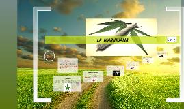 La marihuana se considera una droga alucinógena; es decir, c