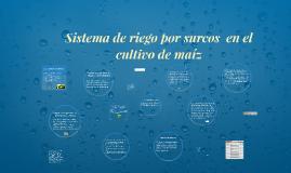 Sistema de riego por surcos  en el cultivo de maíz
