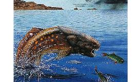 Devonian Extinction