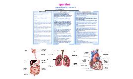 aparato digestivo, rspiratorio y circulatorio