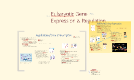 Copy of BI 3: Eukaryotic Gene Regulation