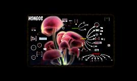 Copy of Hongos