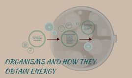 Copy of ORGANISMS AND HOW THEY OBTAIN ENERGY