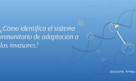 ¿Cómo indentifica el sistema inmunitario de adaptación a los