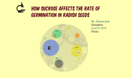 How Sucrose Affects the Rate of Germination in Radish Seeds