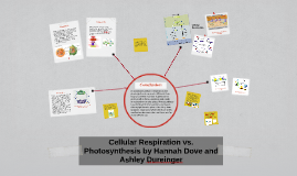 Copy of Cellular Respiration vs. Photosynthesis