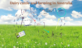 Dairy cattle and farming in Australia