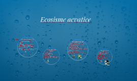 Copy of ecosisteme acvatice
