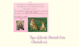 Copy of Facts about the Cheetah