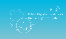 The Rabbit Digestive System VS Human Digestive System