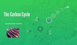 The Carbon Cyle