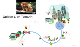 Copy of Golden Lion Tamarin