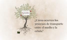¿Cómo ocurren los procesos de transporte entre el medio y la