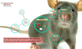 Mejora del envejecimiento prematuro del ADNmt  y la interacc