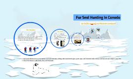 Fur Seal Hunting In Canada
