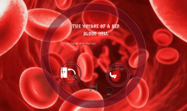 The Voyage of a Red Blood Cell