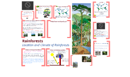 Rainforests - Year 7