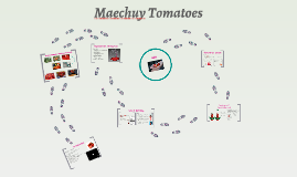 Maechuy Tomatoes