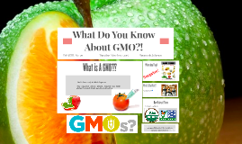 What Do You Know About GMO?!