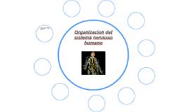 organizacion del sistema nervioso humano