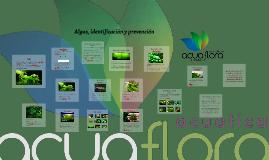 Algas, identificacion y prevencion