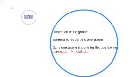 Dissection d'une graine