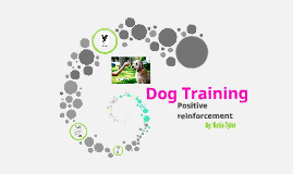 Dog Training Method