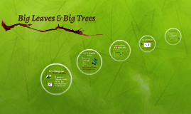 Big Leaves & Big Trees