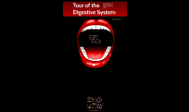 Tour of the Digestive System