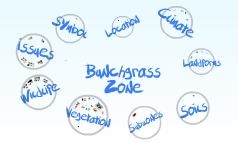 Bunchgrass2