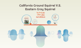 California Ground Squirrel V.S. Eastern Gray Squirrel