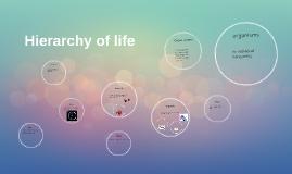 Hierarchy of life