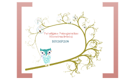 Copy of paradigma psicogenetico (constructivista)