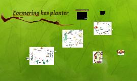Formering hos planter
