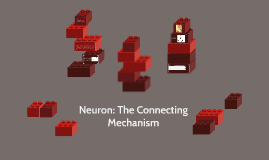 Neuron: The Connecting Mechanism
