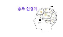 복사본 - 중추신경계