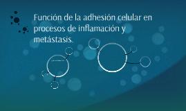 Función de la adhesión celular en procesos de inflamación y
