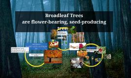 Broadleaf Trees