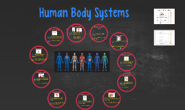 8th grade Human Body Systems