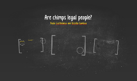 Are chimps legal people?