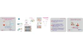 Topology Framework (LNG&HEN)