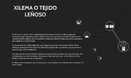 Copy of XILEMA O TEJIDO LEÑOSO