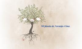 Mi planta de Naranja-Lima